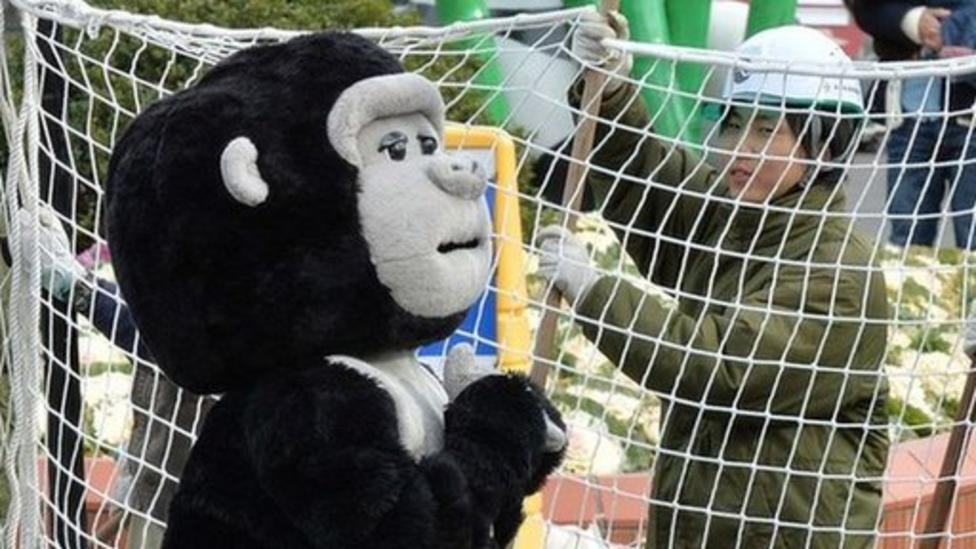 Japanese zoo stages 'gorilla escape'