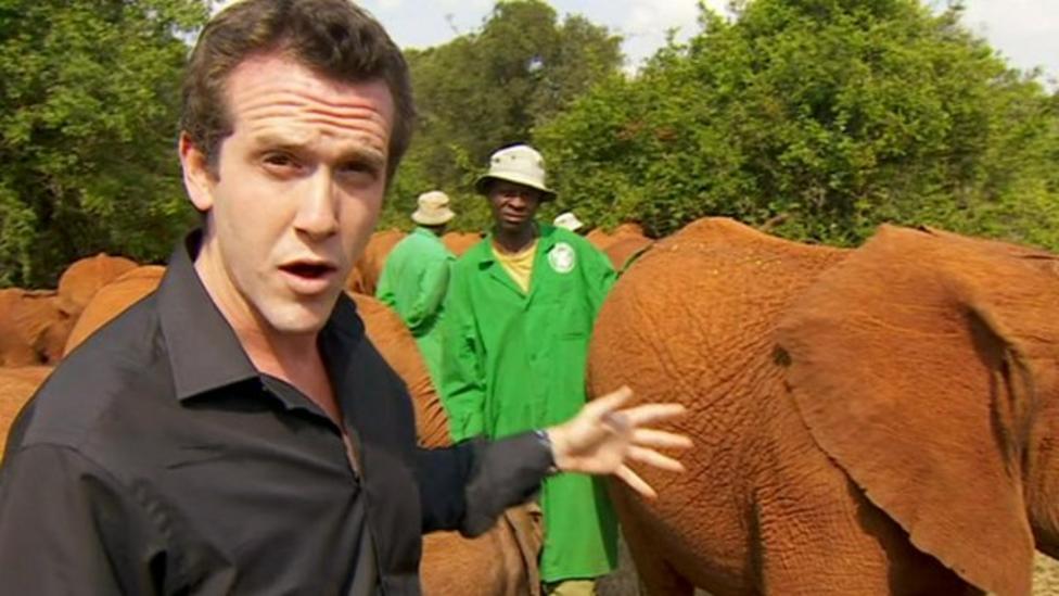 Big drop in wild elephant numbers