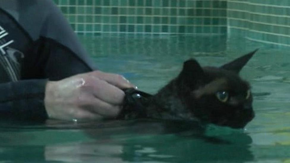 Swimming helps cat's achy joints