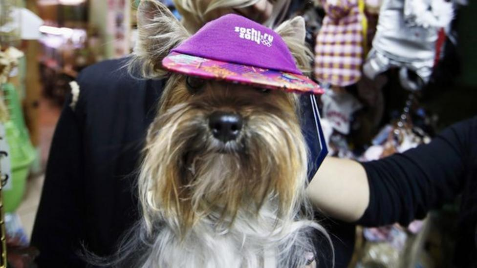 Pets get dressed up Sochi-style