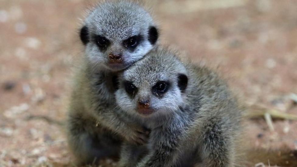 Big zoo sleepover unlocks animal sleep secrets