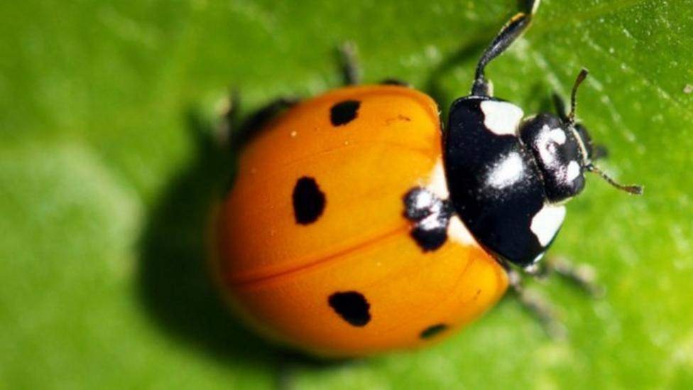 How fast can a ladybird fly?