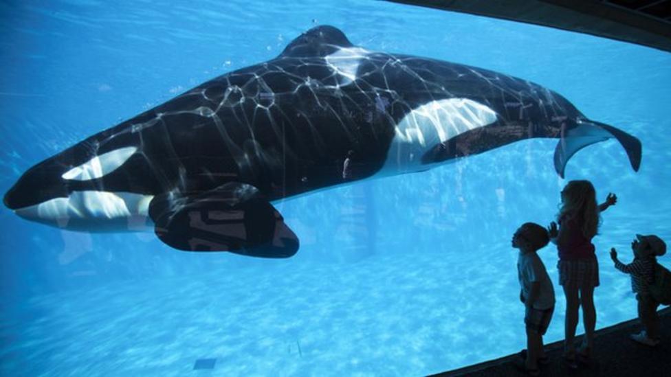 Kids call for SeaWorld killer whale ban