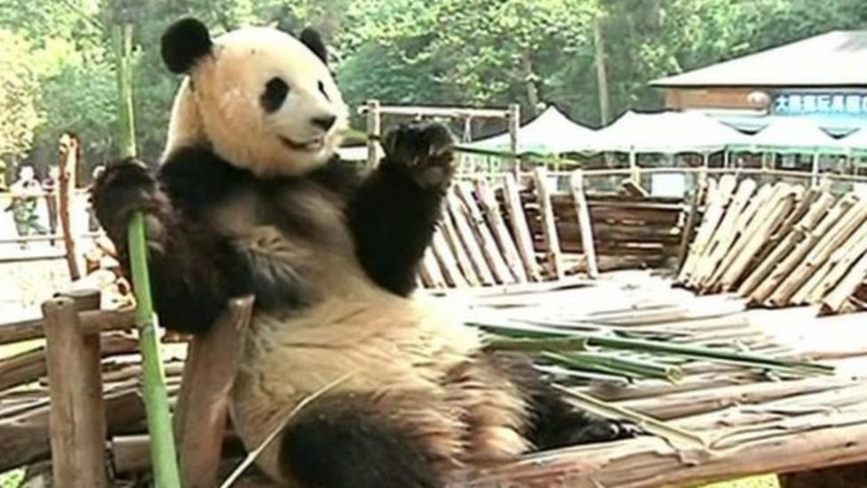 Amusement park for lonely panda