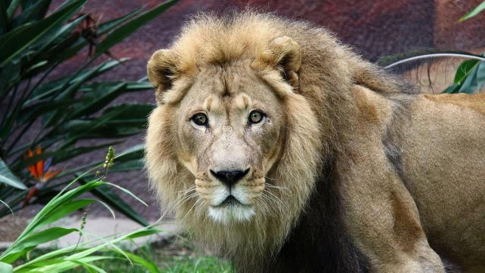 Family break down in lion enclosure