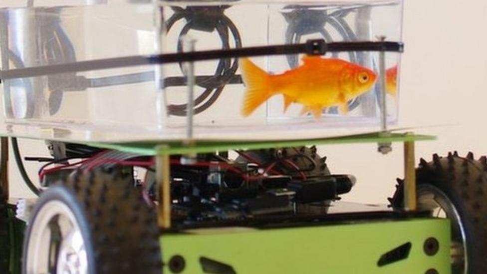 Fish takes wheeled tank for a spin