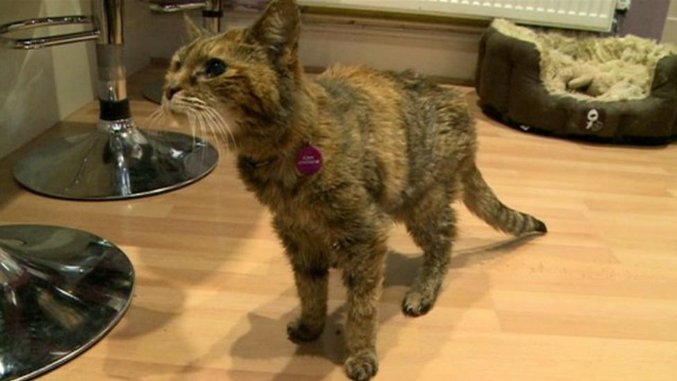 Meet the oldest cat in the world