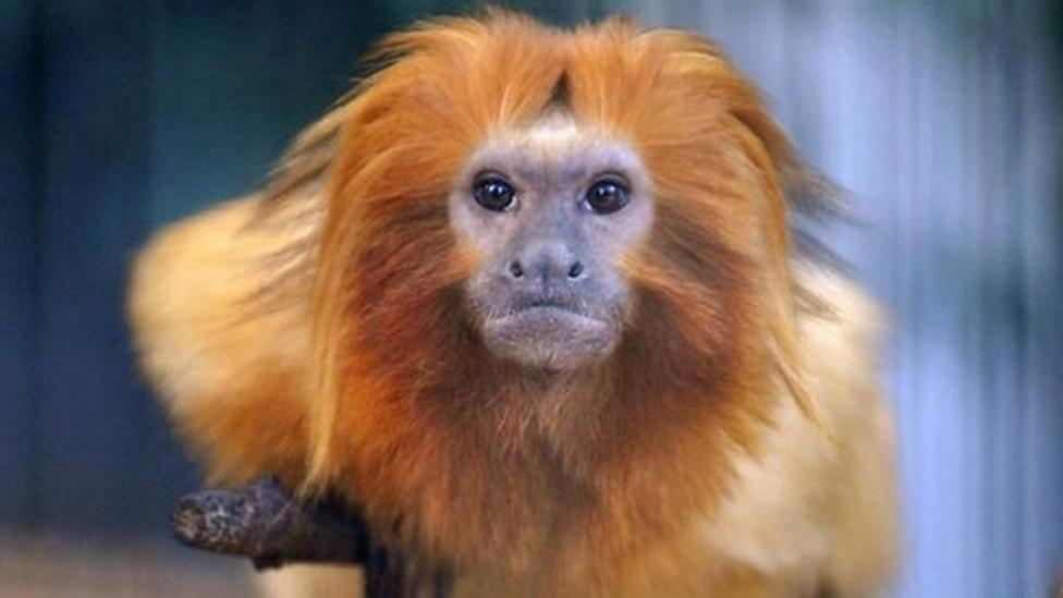 Should monkeys be kept as pets?