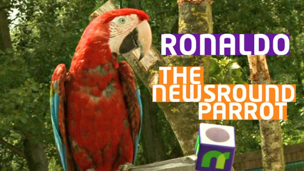 Parrot predicts Friday's quarter-finals