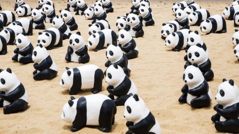Hundreds of pandas on display