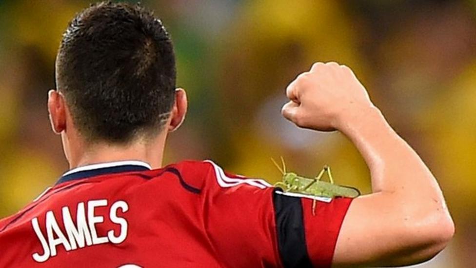 Bug invades World Cup quarter final