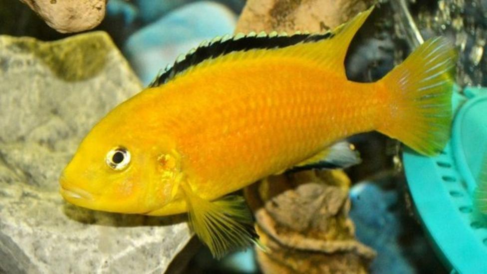 Fish 'may have better memories'