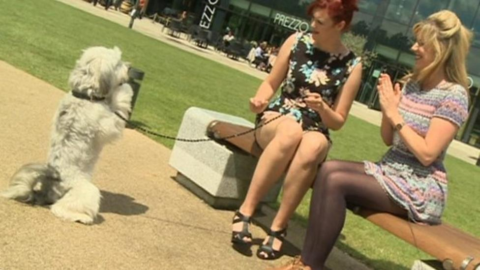 Ashleigh & Pudsey perform famous trick!