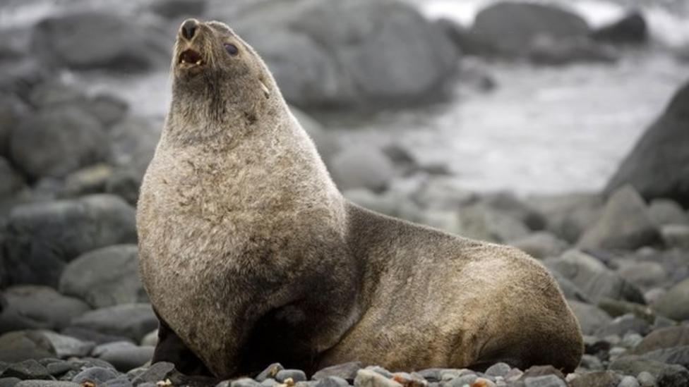 Seals 'stressed' by warming seas