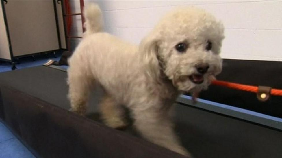 Doggy gym opens in USA