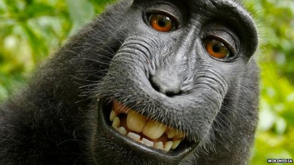 Monkey selfie causes legal row