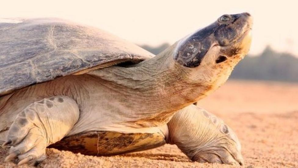Scientists overhear turtle chatter