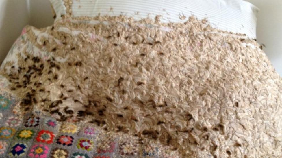 Giant wasp nest discovered in bedroom