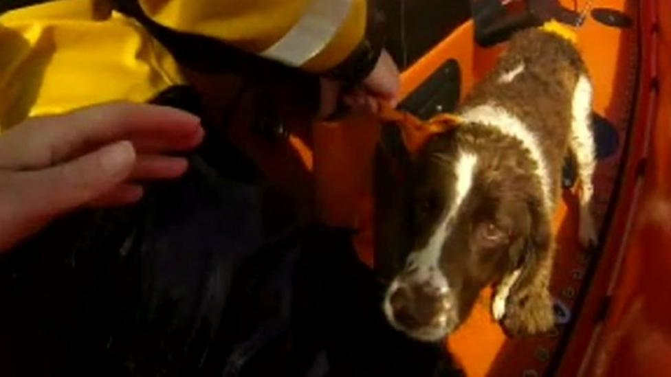Dog rescued after 10 days on a cliff