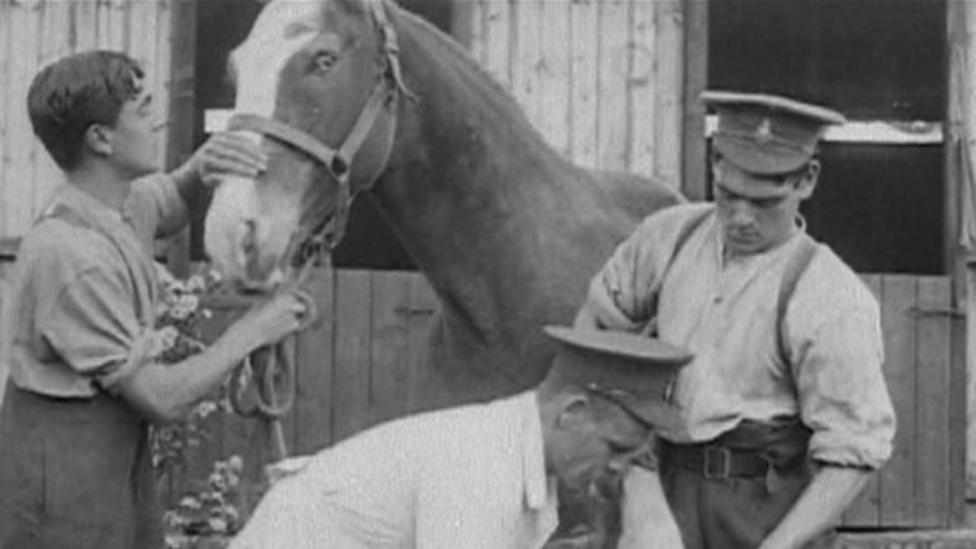Warrior the war horse awarded medal
