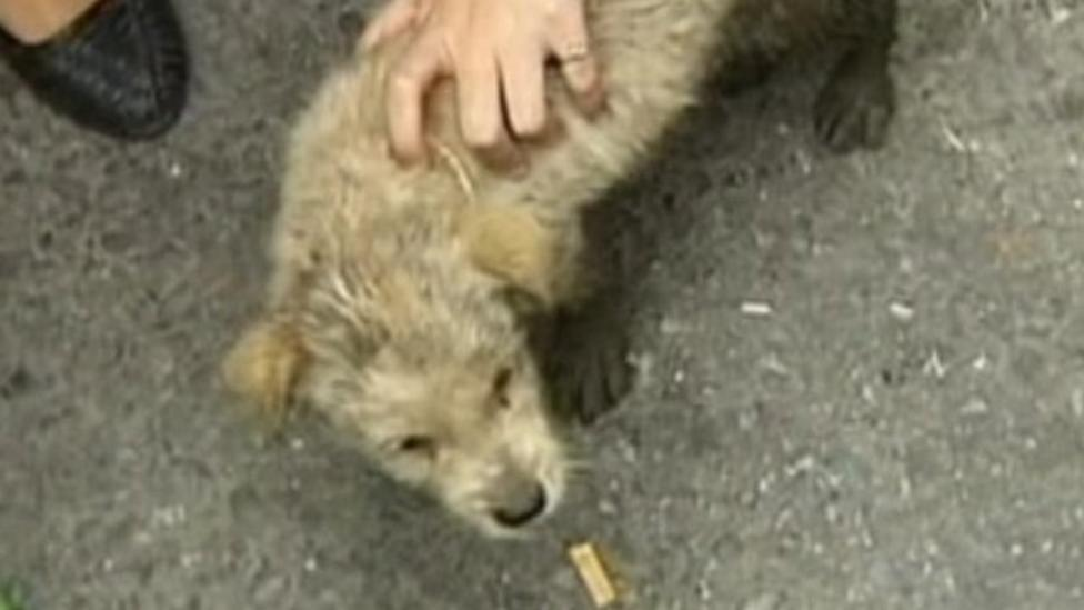Lucky escape for dog in drain