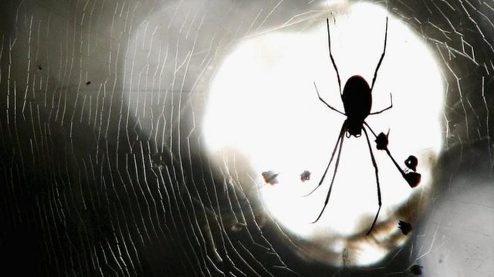 How to get rid of a spider the nice way