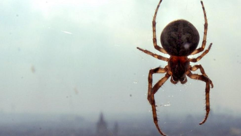 'It's a great time for spiders'
