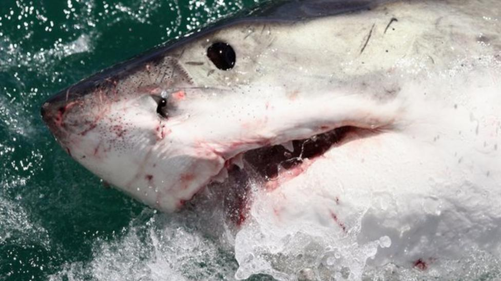 Sharks show their own personalities
