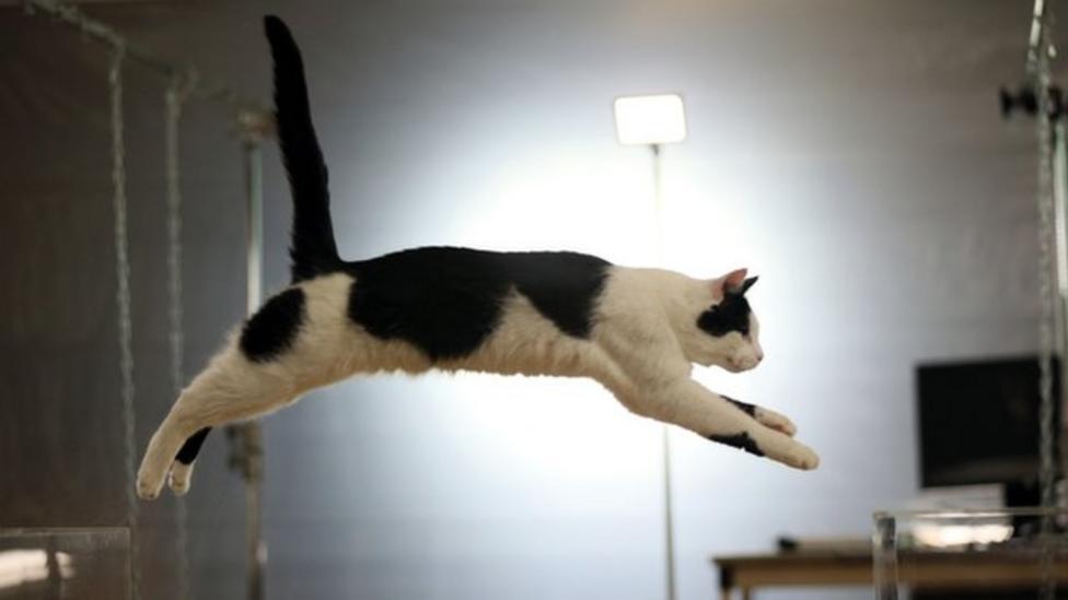 Cat study reveals feline secrets