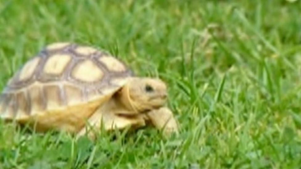 Tortoises born in Lake District