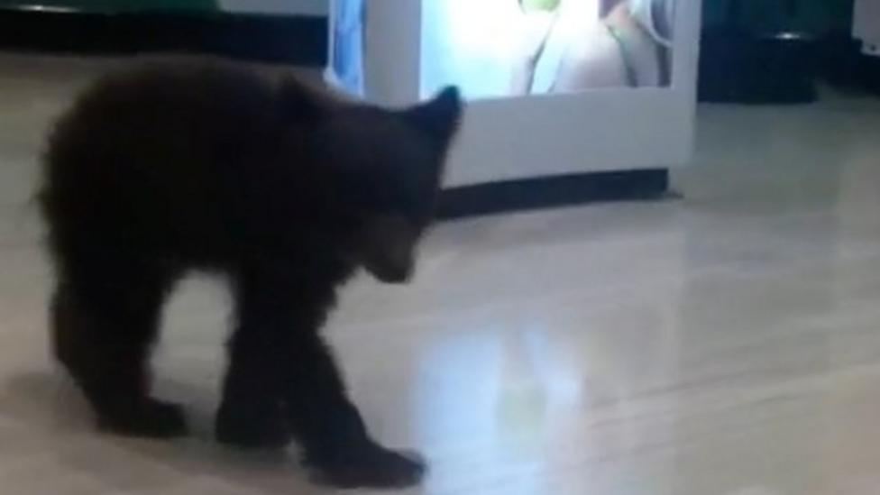 Bear filmed wandering around shop