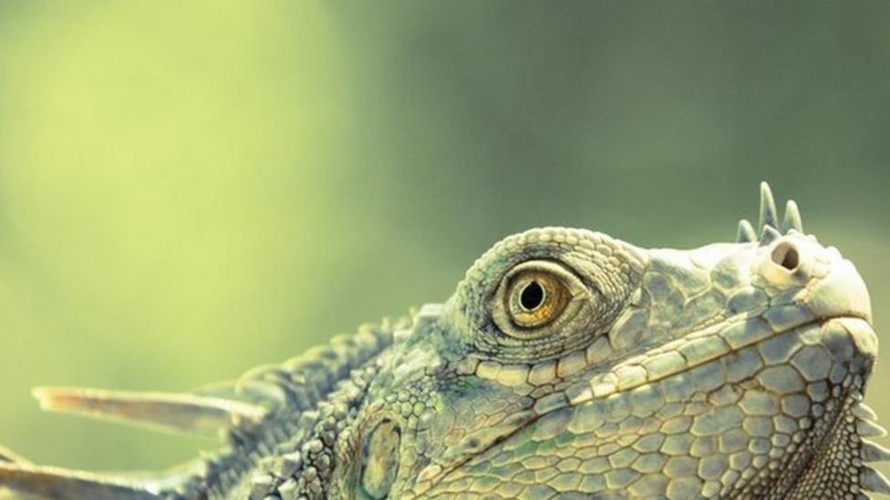 Young snappers' wildlife wonders