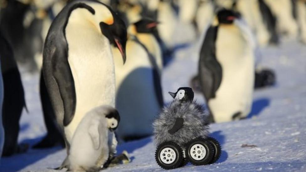 Robo-penguin helps bird research