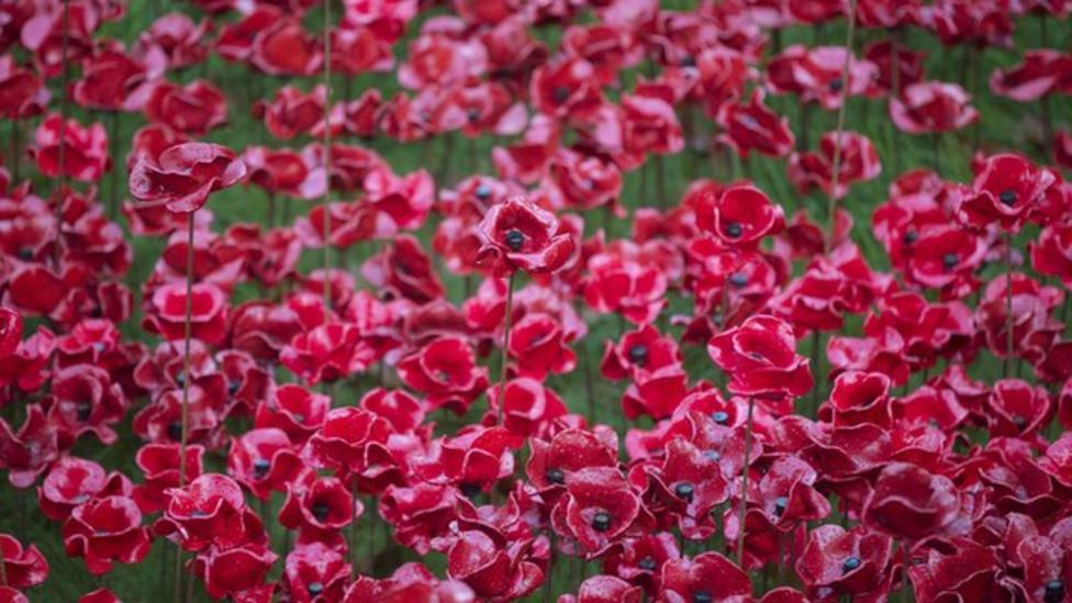 Poppy display wins the hearts of millions