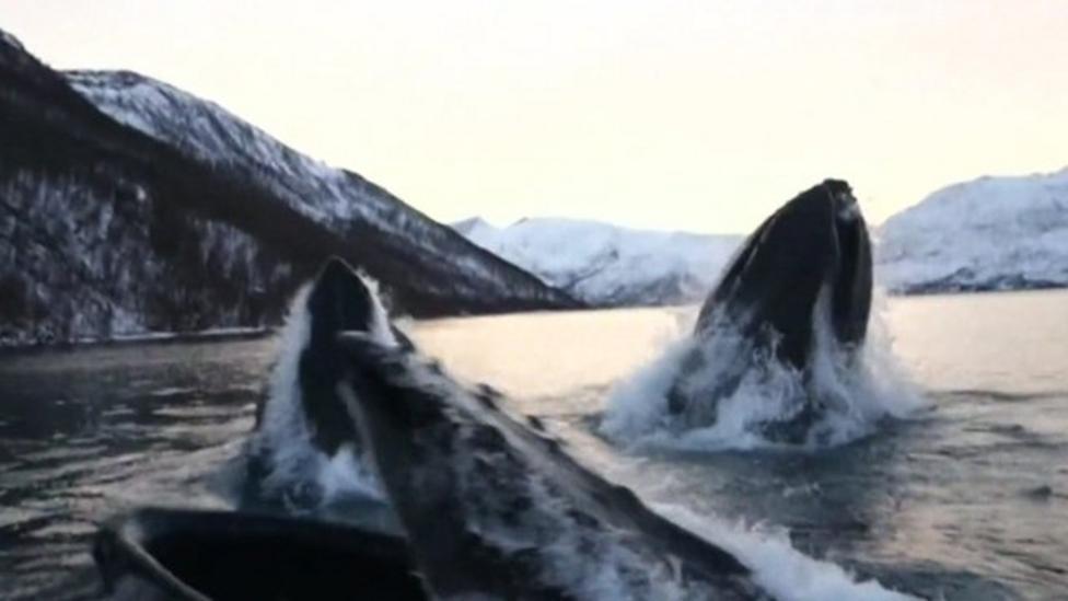 Humpback whales shock fishermen