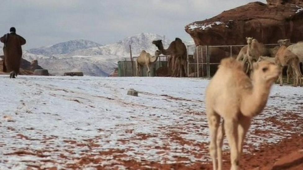 Snow carpets desert in Saudi Arabia