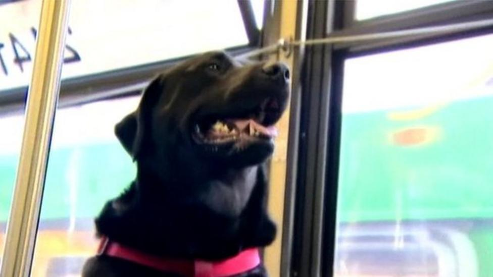 Dog rides bus alone for 'walkies'