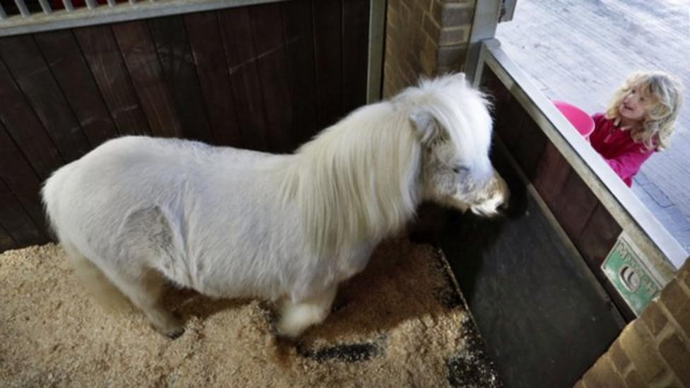 Petite pony gets periscope for peeping