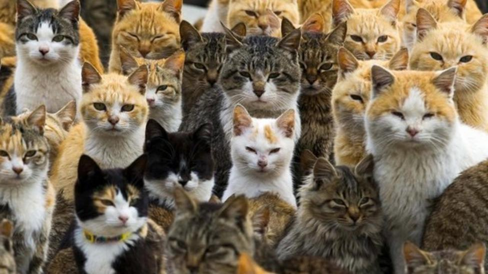 Tourists flock to Japan's Cat Island
