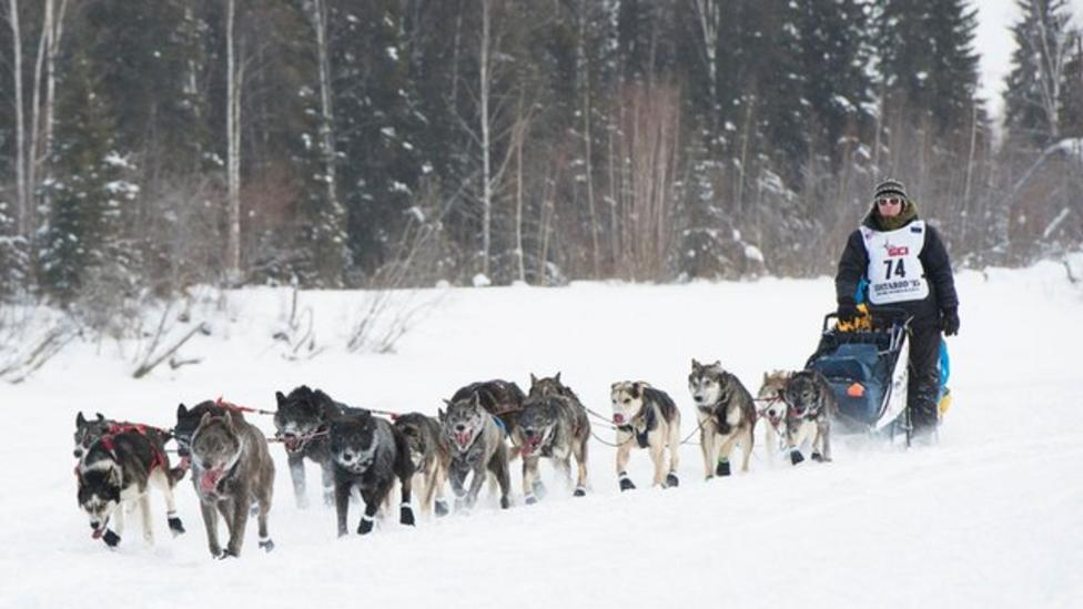 Dog race moved due to lack of snow