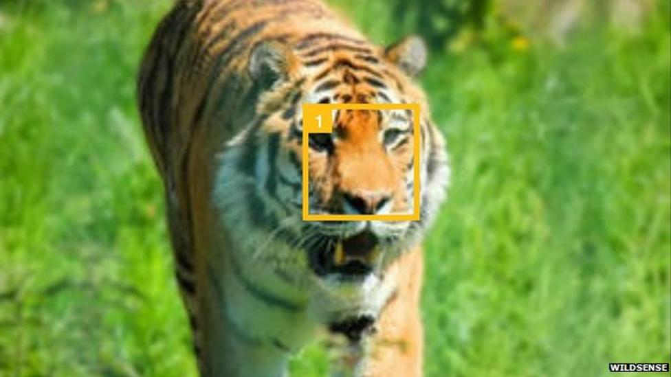 Tiger-tagging app launched