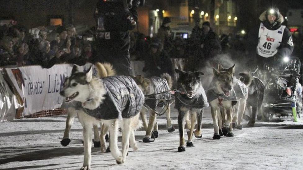 Huskies race 1,000 miles across Alaska