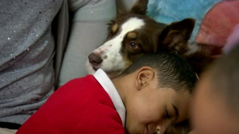 Primary school hires dog as teacher