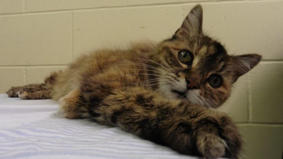'Loudest purr in world' cat finds home