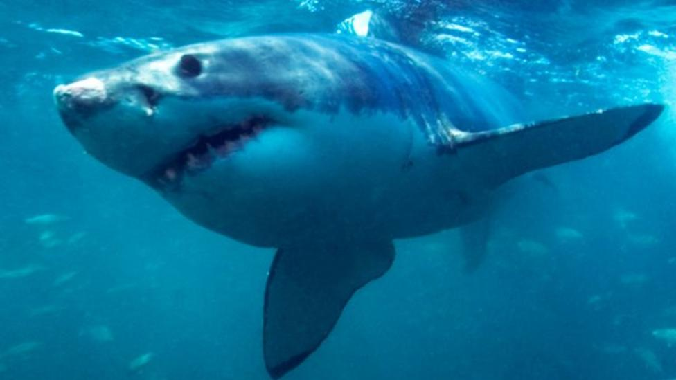 Sharks on camera in top new BBC show