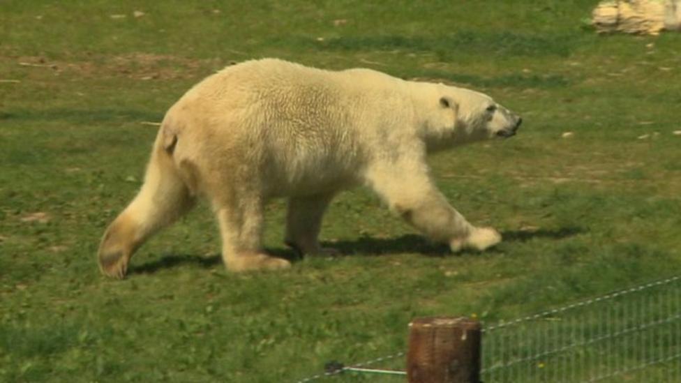 Leah meets England's only polar bears