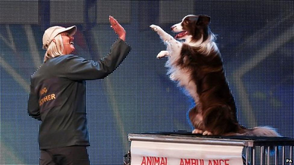 Should dogs appear on talent shows?