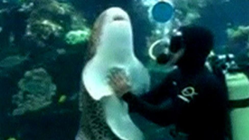 Leopard shark gets underwater cuddle