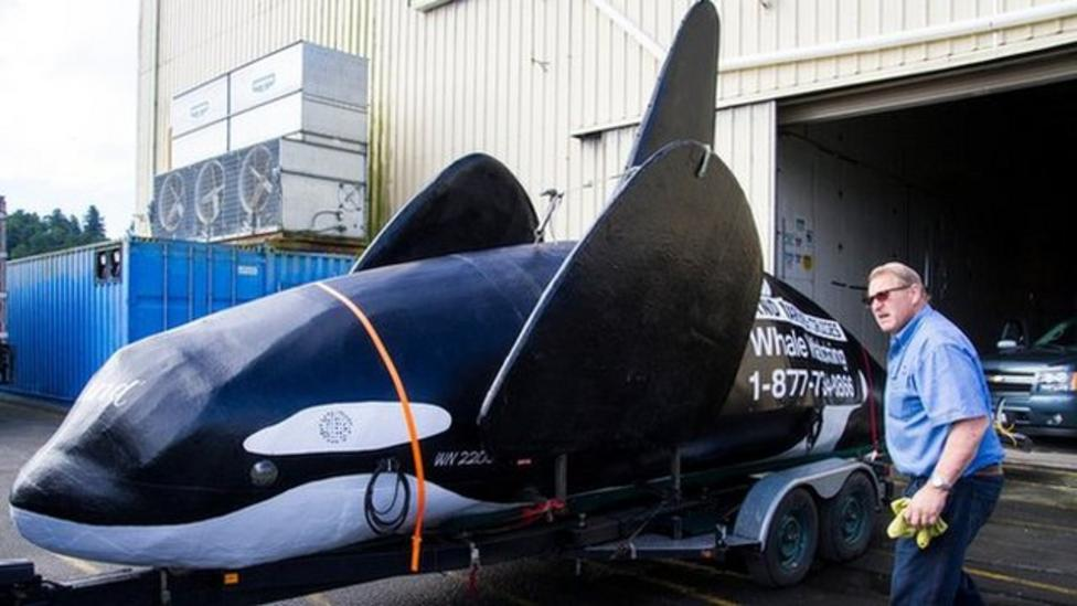 Fake whale used to scare sea lions