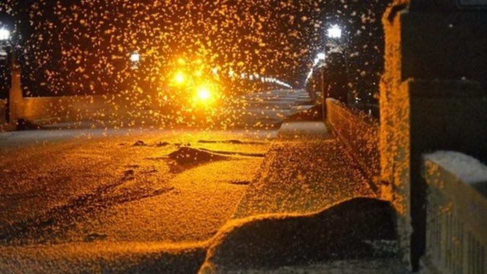 Swarm of mayflies closes US bridge